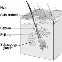 Hair Growth Normal Cycle Of Hair Loss
